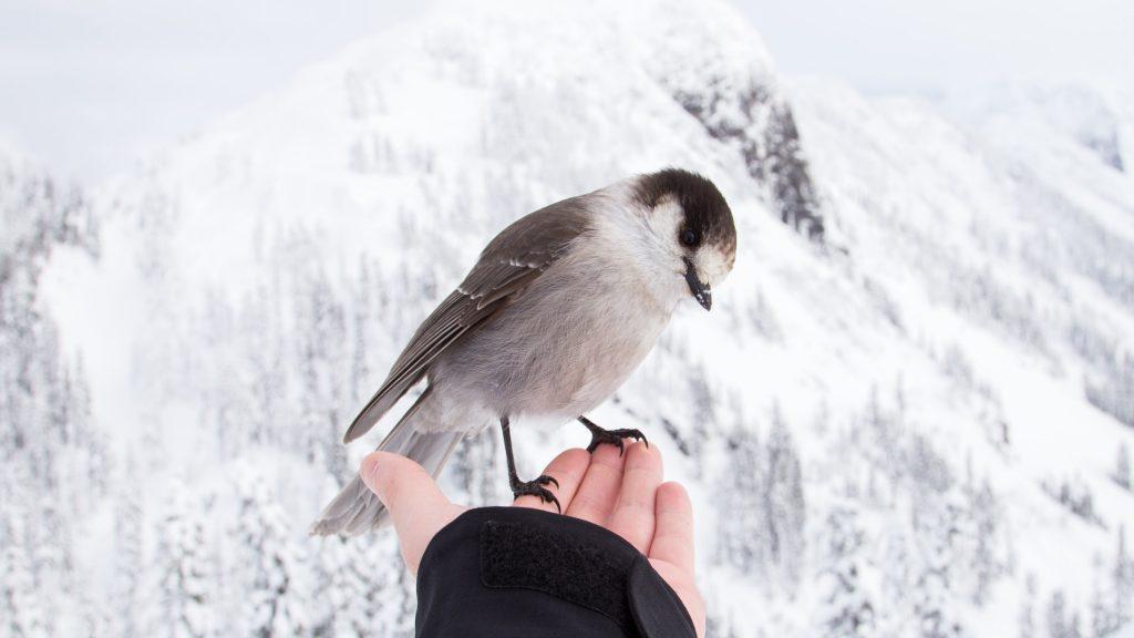 TPO28托福聽力解析 - Lecture 2 : Animal Behavior