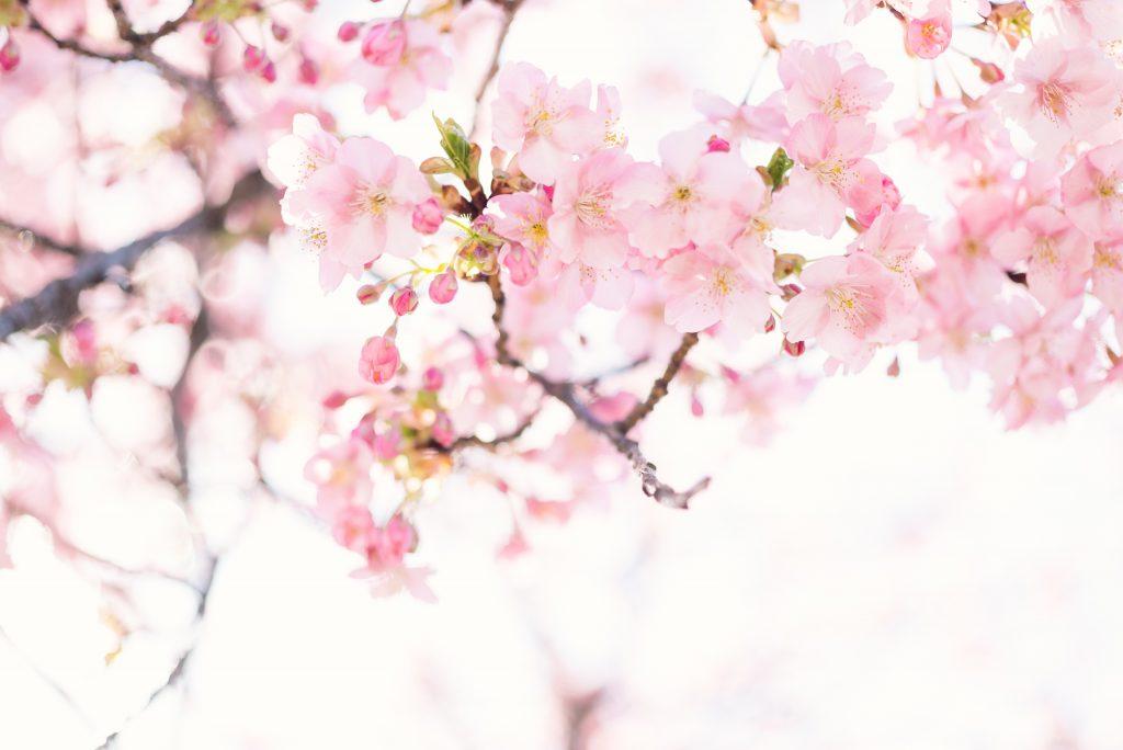 【日檢】想通過日檢N1必學的準備方法-言語知識篇